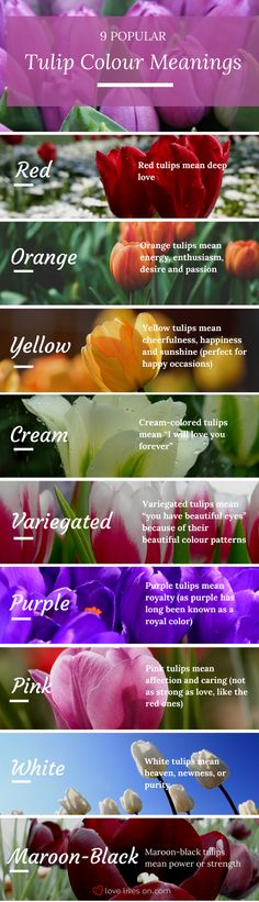 Infographic: 9 Popular Tulip Colour Meanings. Learn tulip colour meanings so you can create a meaningful sympathy or funeral arrangement.