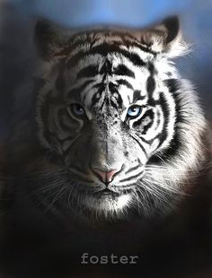 Hey, I found this really awesome Etsy listing at https://www.etsy.com/listing/43327448/tiger-art-tiger-print-tiger-painting