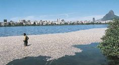 Rio Water Pollution: An Olympic Size Problem Tourism Development, Water Pollution, Olympics, Rio, Swimming, News, Beach, Outdoor, Swim