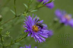 #Flower #Fly #Macro