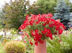 Выращивание петунии в контейнере   Дачный сад и огород