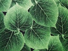 Hoffman Aspen Creek Leaves Grass Green Leaf Fabric Yard -- 10.50
