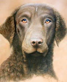 Curly Coated Retriever ~ Classic Look - Peter Skillen Ancient English, Curly Coated Retriever, English Dogs, Dog Artwork, Dog Show, Dog Portraits, Beautiful Paintings, Dog Breeds, Sculptures