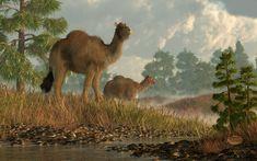 High Arctic Camel by deskridge.deviantart.com on @deviantART