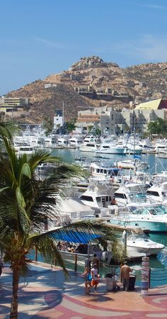 Yacht harbour in Cabo San Lucas, Mexico
