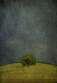 Jamie Heiden // lonely tree