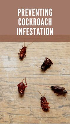 Cockroaches are the harbingers of bad health and worse conditions once they are visible fluttering in the kitchen, making the annoying scuttling legs sound. Cockroach Control, Health, Legs, Kitchen, Cooking, Health Care, Kitchens, Cuisine, Bridge