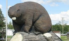 Giant Beaver, Beaverlodge, Alberta -- need we say more?