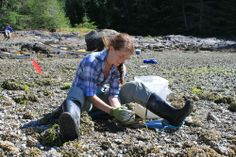 A three-year study of ancient clam gardens in the Pacific Northwest reveals that coastal First Nations people used to reap superior harvests using rock-walled beach terraces.