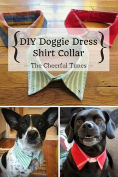 these are sooo cute. I bought something like this for my grand-dog Lucy. Upcycle collared dress shirts from the thrift store into a stylish DIY collar for your dog! Perfect gift for dog owners, or a fun craft for your own pet. SO EASY! No sew, 10 minutes Gifts For Dog Owners, Gifts For Dogs, Diy Dog Gifts, Diy Toys For Dogs, Clothes For Dogs, Pet Toys, Girl Dog Clothes, Dog Crafts, Pet Craft