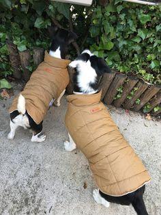 Chubasqueros para perros de Pitimini Cose