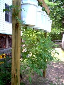 Growing tomatoes upside down. I've never had success in growing tomatoes, but I hear they are easier to grow this way. Veg Garden, Edible Garden, Lawn And Garden, Garden Cottage, Garden Plants, Tomato Garden, Vegetable Gardening, Organic Gardening, Gardening Tips