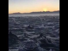 2000 dolphins swim together - YouTube
