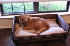 What exactly is a rustic industrial dog bed? I just know that the furniture theme for my sitting and dining rooms is metal + dark or reclaimed wood. The sitting room has a low windo… Industrial Dog Beds, Industrial Interiors, Rustic Industrial, Rustic Dog Beds, Crate Bed, Daisy Dog, Bed Images, Diy Dog Bed, New Beds