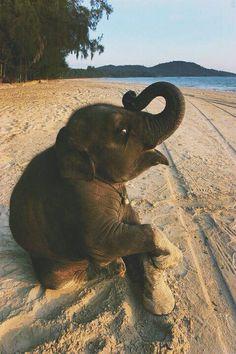 Baby beach elephant