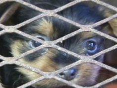 Today Show exposes puppy mills. AKC-registered breeders raising dogs in 'miserable' conditions Pet Organization, Puppy Food, Dog Food, Pet News, All About Animals, Puppy Mills, Today Show, Funny Animal Pictures