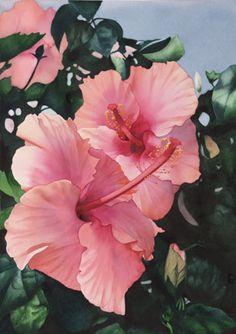 pink hibiscus  by Kathleen Alexander
