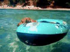 Swimming Pool GIFs - Find & Share on GIPHY