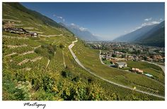 Martigny region with vineyards
