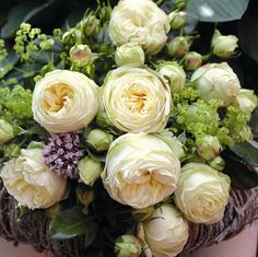 (Rosen Tantau 2014) An outstanding novelty, of which many rose friends and experts waited for a long time.Now, at last, we could complete our renowned nostalgic Piano®-range by a cream-white rose. Such as all Piano® roses also this...
