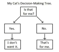 Your cat's decision-making tree