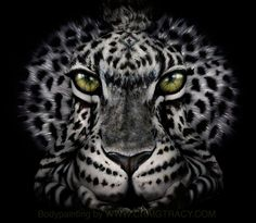 ANIMALS gallery | Craig Tracy's Fine-Art Bodypainting Gallery