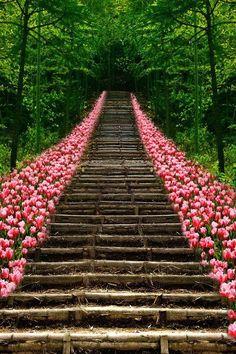 Stairway to Heaven.or Tulip Stairs to Kyoto, Japan Stairway To Heaven, Beautiful World, Beautiful Gardens, Beautiful Places, Beautiful Stairs, Beautiful Flowers, Beautiful Scenery, Beautiful Pictures, Beautiful Ocean