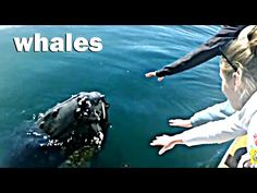Whales for Kids, Whale Videos for Children, Lots of Whales