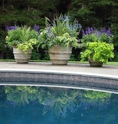 Beautiful container plantings!