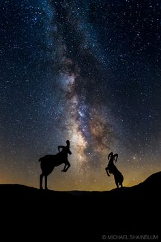Counting Sheep by Michael Shainblum
