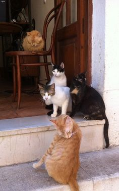 Cats in Corfu Town, Greece! More about Corfu at corfu2travel.com