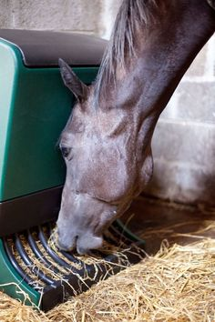 Feed your horses like a horse - at ground level naturally using our trickle feeder Harmony www.harmonyfeeder.com
