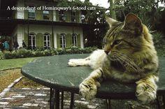 Hemingway House & 6-toed cats, Key West, FL