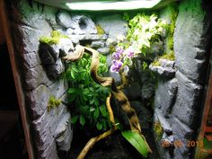 crested gecko cage