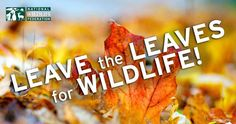 Leave leaves on the ground -- they have a lot of benefit to wildlife and your garden. http://www.nwf.org/What-We-Do.aspx