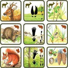 Pexetrio Plus: Savci File Folder Activities, Animal Activities, Activities For Kids, Crafts For Kids, Science Experiments Kids, Science For Kids, Science And Nature, Preschool Education, Teaching Kids