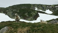 On the way up to Lysefjorden.  Photo Kristin Meberg.