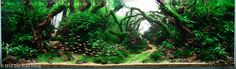 amazing aquascapes | Biggest is probably best, so here are the winners and runners-up for ...