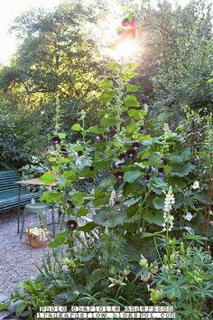 Trädgårdsflow: September