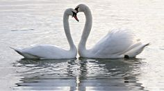 water animals - Bing Images