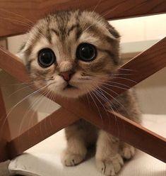 N'oooldu kuzumm ne bu soru işareti bakışı, sen baldın da sonradan kedi mi oldun?
