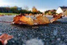 autumnal aspect - autumn is beautiful!