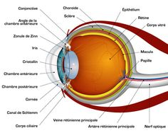 Human eye anatomy parts of the eye explained diagram human eye diagram diagram site 28 images diagram of the eye diagram site eye diagram diagram site printable eye diagram quiz unlabeled diagram site ccuart Image collections