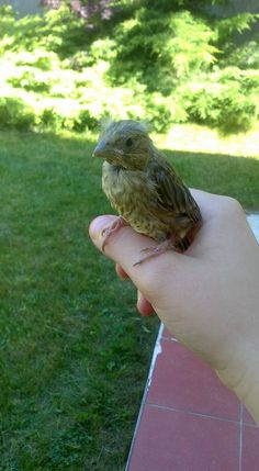 #friendly #Bird