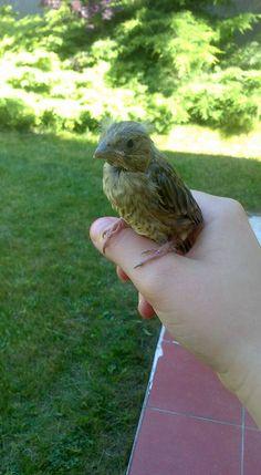 #friendly #Bird