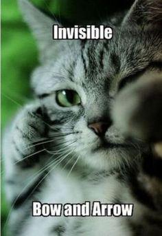 Catniss?  #cotd