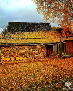 Autumn in Lithuanian village