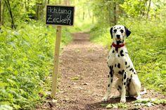Hunde vor Zeckenbissen schützen