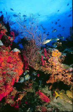 we are going to want some BA coral with some amazing live rock...aiming for a self supporting ecosystem...