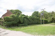 Un jardinier anglais fait naître un dragon géant dans son jardin en taillant sa…